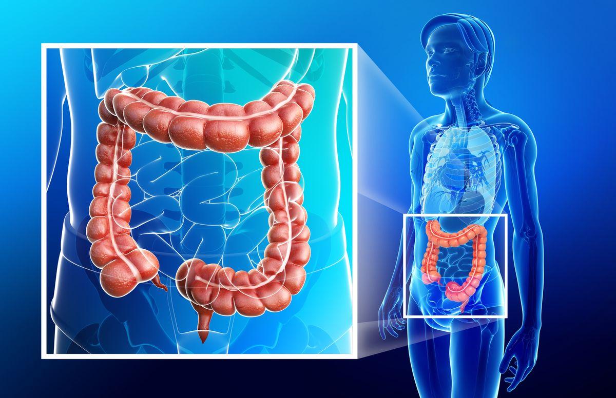 terapia wisceralna jest systemem leczenia narządów wewnętrznych